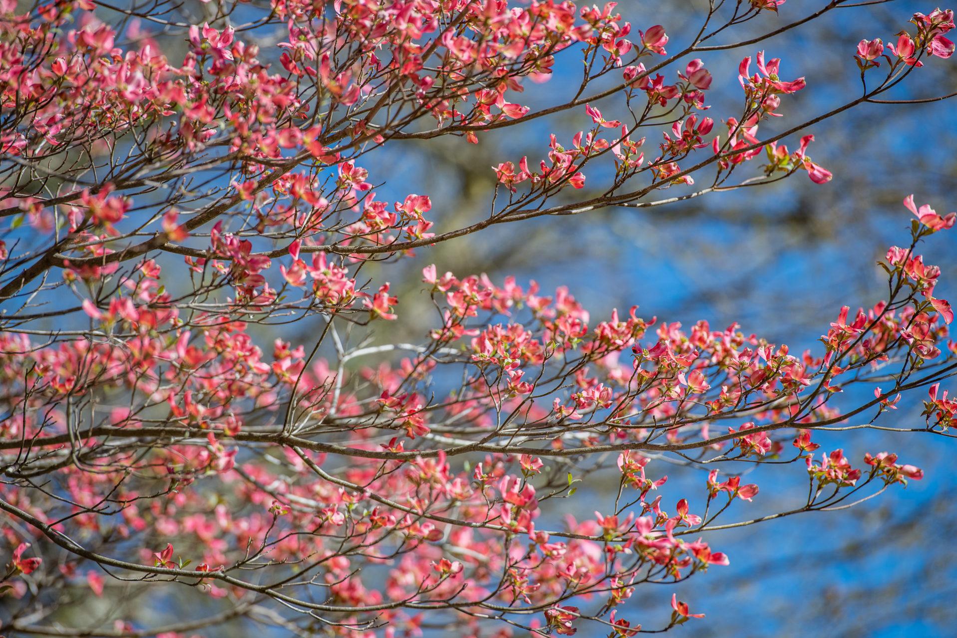 North Georgia – Waterfalls &  Spring Flowers – Spring – 2019