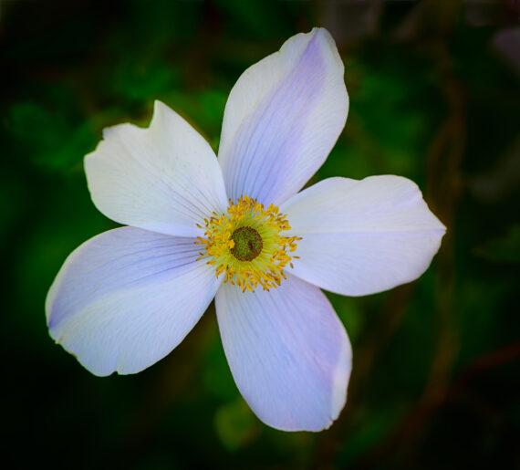 Asticou Azalea Garden and Inn – Maine – Part 7