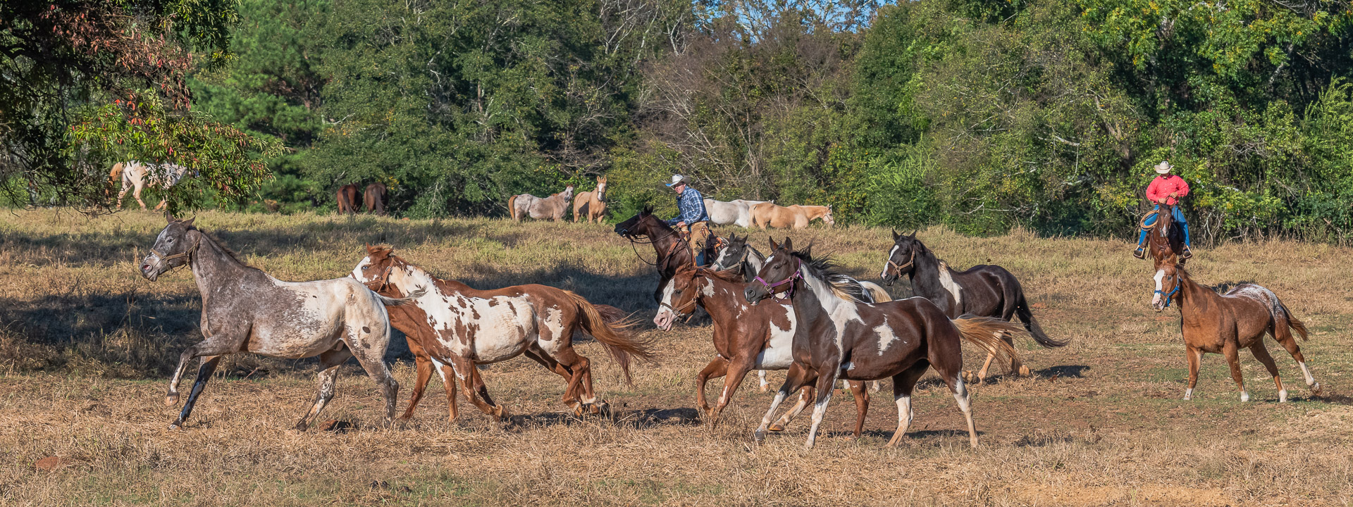Southern Cross Guest Ranch – Equine Photography Workshop – Madison, GA – 2019