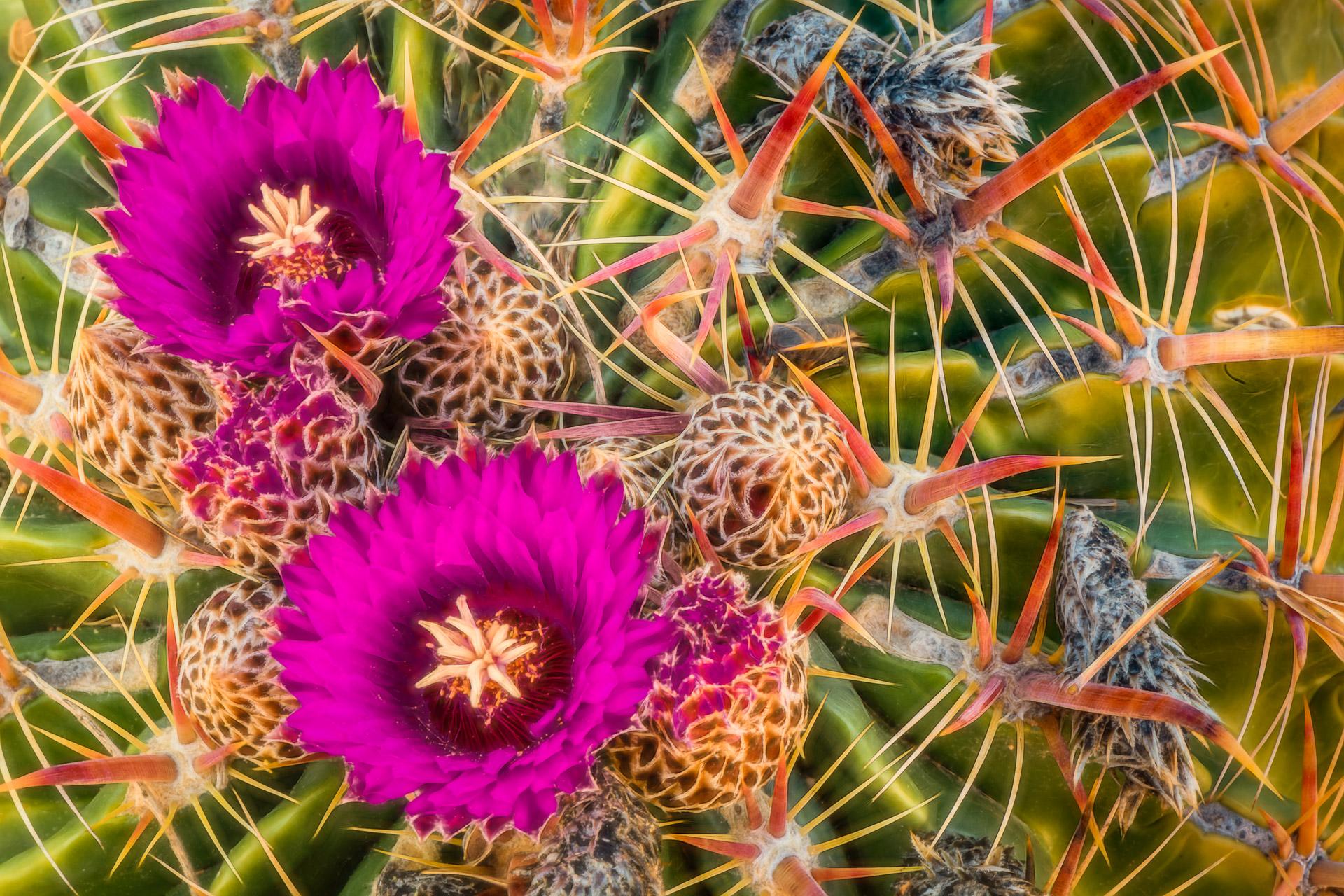 Tucson Botanical Gardens – Tucson, AZ – Part 3 -2020