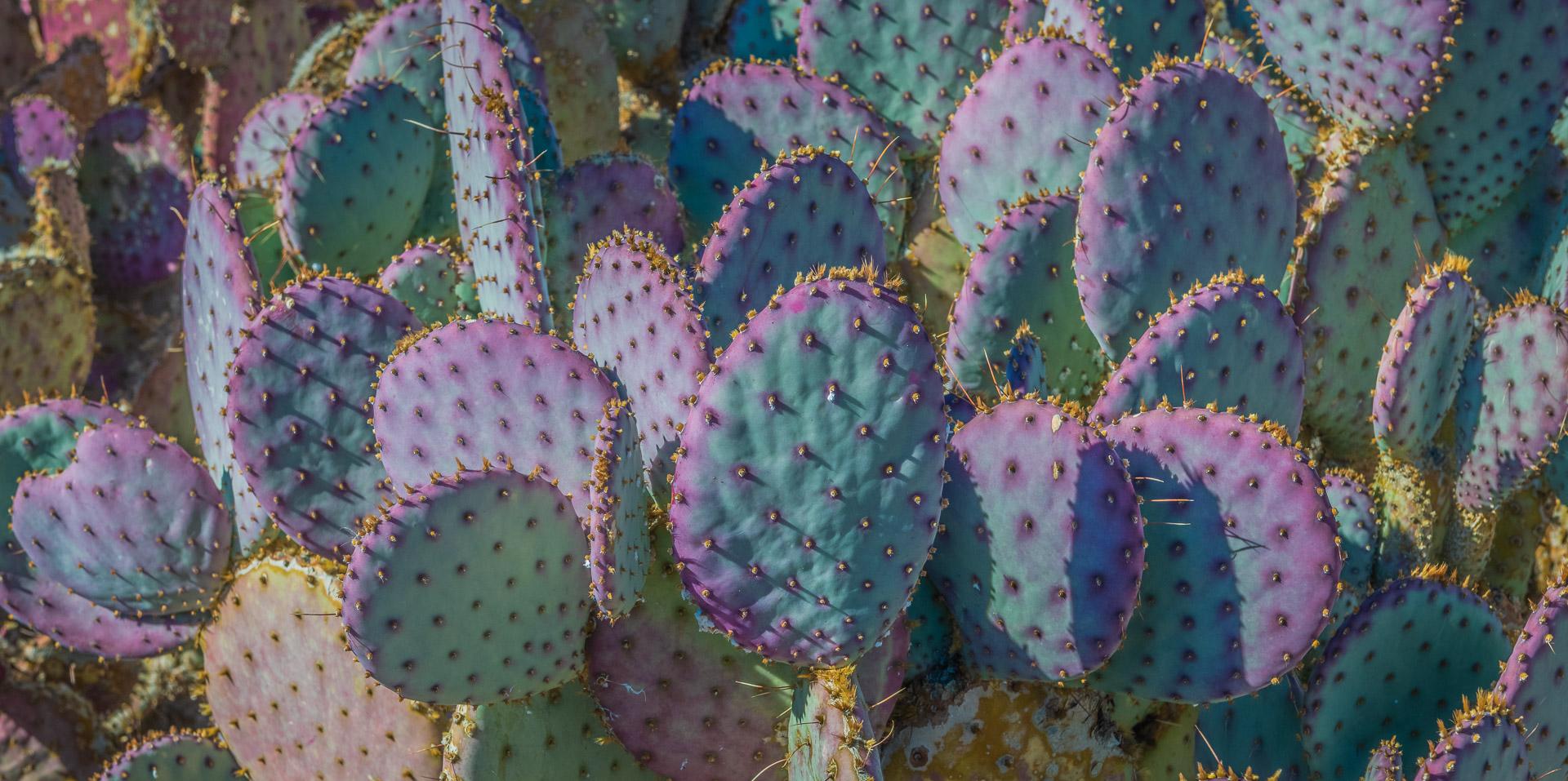 Desert Botanical Garden – Phoenix, Arizona – Part 5 – 2020