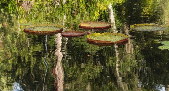 Bok Tower Gardens, Lake Wales, FL – 2020